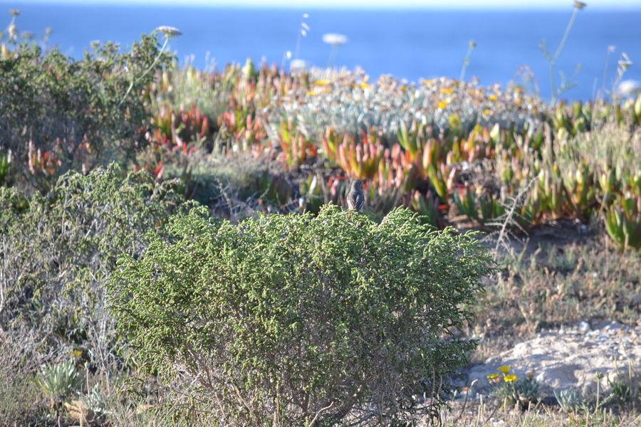 Growth Nature Plant Flower No People Outdoors Costa Brava Port De La Selva Spaın Horizon Over Water Bird Small Find It