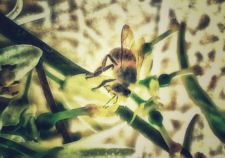 Bee 🐝 Nature_collection Edit @oskar 55
