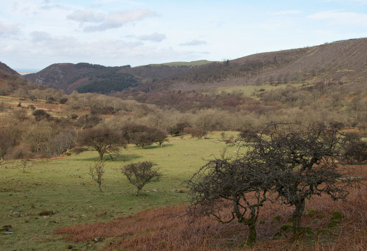 Mountain Mountains Welsh Countryside Tree Rural Scene Sky Growing