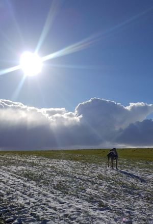 Cloud - Sky Horizon Winter Sunny Day Dog Walkies Snow Sunbeam Lens Flare Field Full Length Sky Outdoors