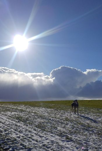 Cloud - Sky Horizon Winter Sunny Day Dog Walkies Snow Sunbeam Lens Flare Field Full Length Sky Outdoors