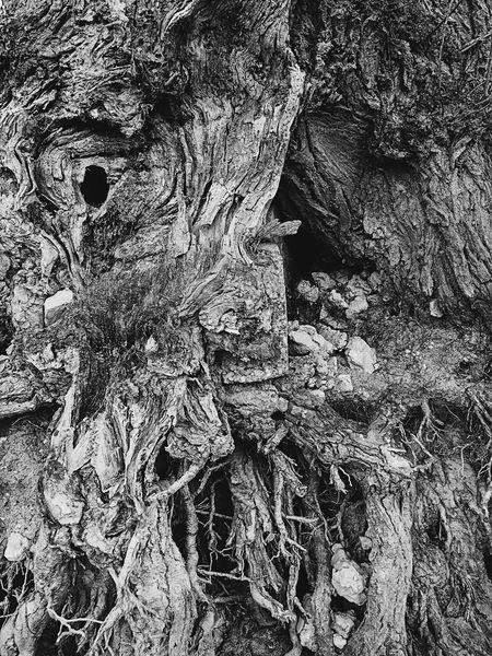 Rough Textured  No People Outdoors Close-up Day Nature Architecture Tree Blackandwhite Shore Roots Full Frame Mobilephotography