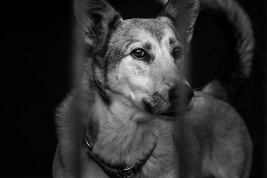 #Dogphotography #Doglife #dogs #Dog #pet Blackandwhite #doglover #Dogs Of EyeEm Pets Portrait Dog Protruding Beagle Close-up