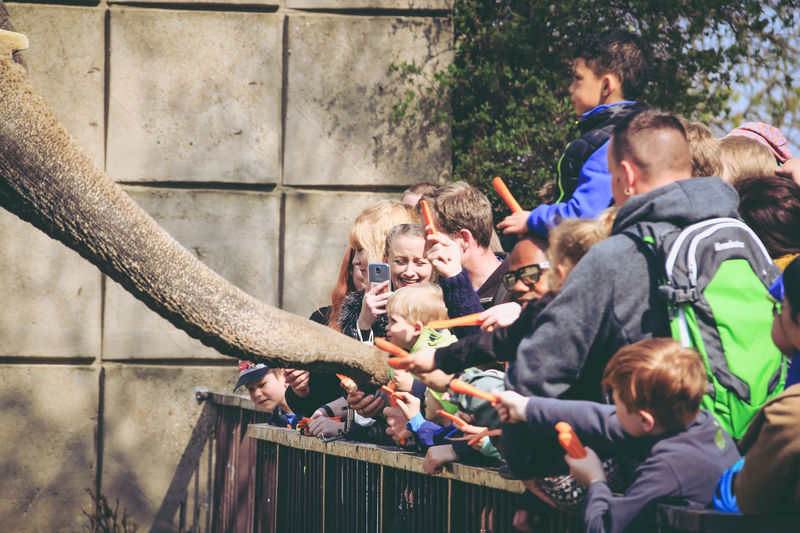 Happy people feeding elephant at zoo