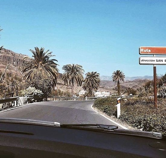 Road sign by palm trees against clear sky