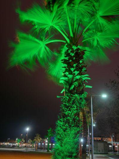 Tree Night Palm Tree Growth City Green Color Outdoors No People Nature City Nightphotography Yalovasahili Nightlife Turkey Yalova Plant Winter Beauty In Nature Green Color Cold Temperature