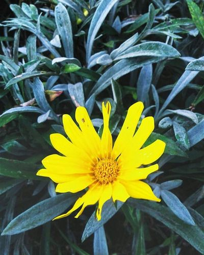 Flower Growth Petal Plant Flower Head Yellow Nature Fragility Beauty In Nature No People Day Outdoors Freshness Beauty In Nature Multi Colored Nature EyeEmNewHere