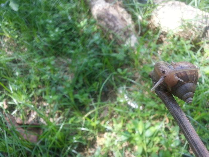 Nature's Diversities Snail Snail🐌 Snails🐌 Snail ❤ Summer Philippines Summer Views Summer Summertime Summer In Aparri Aparri, Cagayan Philippines Aparri Animal Photography Shell Shells🐚