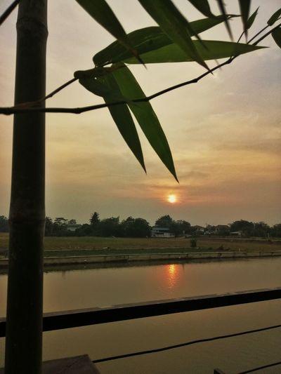 Sunset Bamboo
