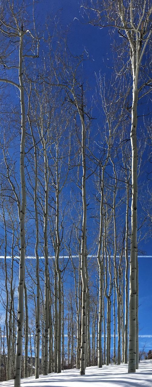 tree, plant, bare tree, blue, nature, branch, beauty in nature, winter, day, no people, sky, cold temperature, trunk, tranquility, tree trunk, snow, tranquil scene, scenics - nature, land, clear sky, outdoors, dead plant