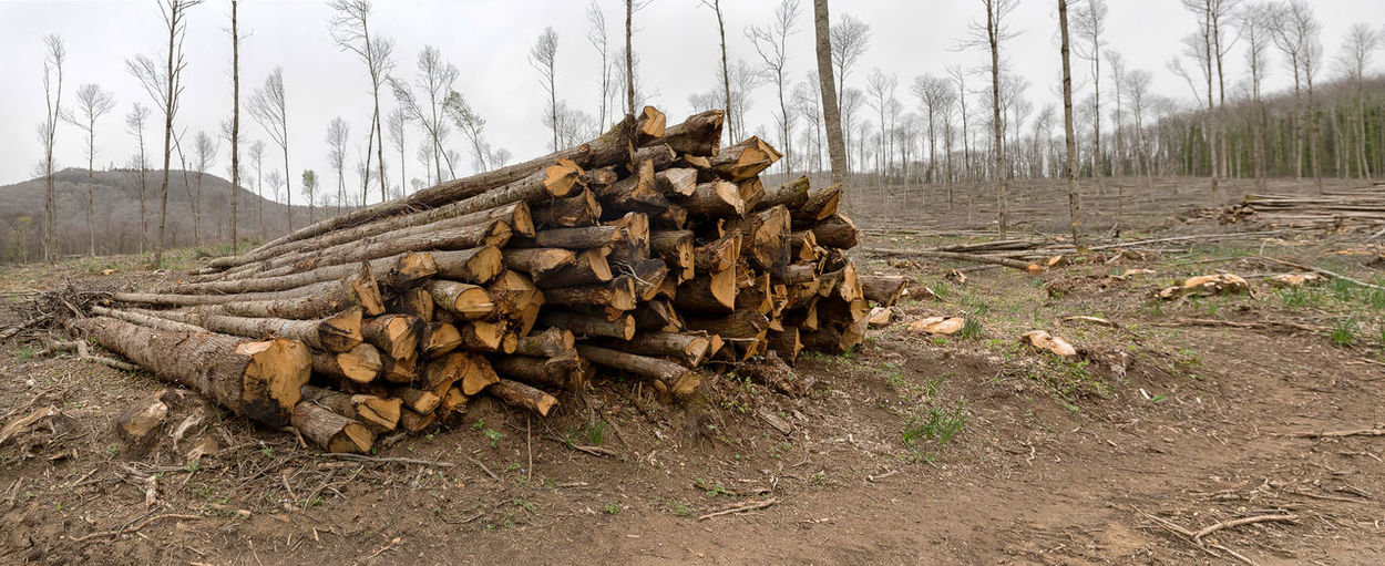 Controlled forest deforestation. In the woods, a pile of tree trunks cut and piled up at the edge of the path, in the background, sporadic young trees left to grow for the future seasons. Abundance Day Deforestation Environmental Issues Field Firewood Forest Land Large Group Of Objects Log Lumber Industry Nature No People Outdoors Plant Stack Timber Tranquility Tree Wood Wood - Material WoodLand Woodpile