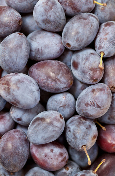 Many damson plums Agriculture Autumn Farmers Market Abundance Backgrounds Close-up Damson Plums Day Food Food And Drink Freshness Fruit Harvest Healthy Eating Large Group Of Objects No People Organic Outdoors Plum