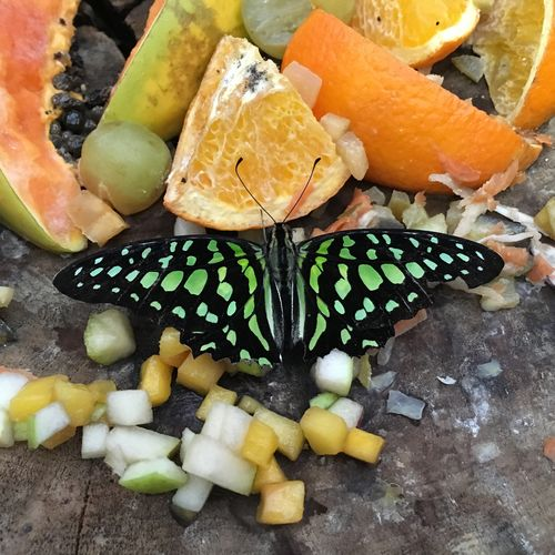 Butterfly Perching On Cut Fruit