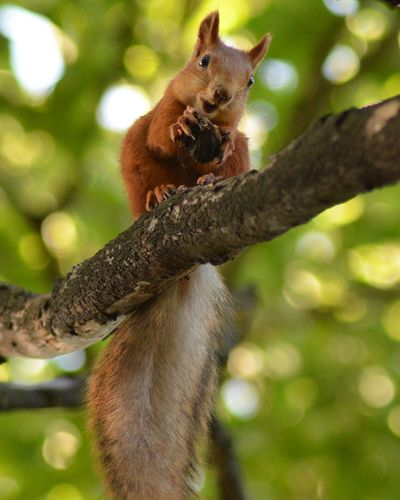 Animal Animal Wildlife One Animal Cute Outdoors Tree Mammal Squirrel Day Animals In The Wild No People Branch Tail Nature Animal Themes Climbing Pets Portrait Leopard Squirrel Nut Smyle