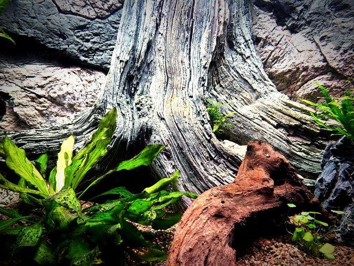 Tree Trunk Rock