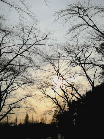 Tree Silhouette Low Angle View Sky Nature No People Sunset