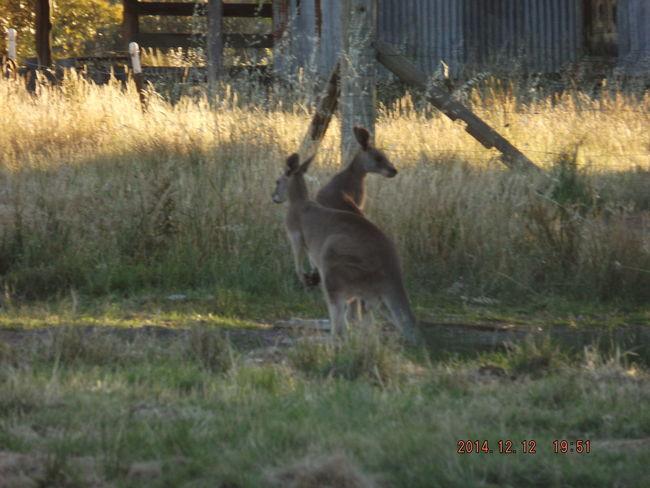 Kangaroo Purist No Filter