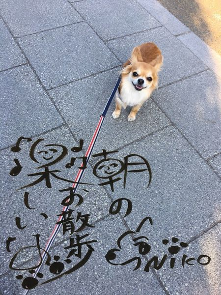 Dog Pets Street One Animal High Angle View Domestic Animals Animal Themes Looking At Camera Portrait Road Outdoors Mammal No People Day Niko Family Chihuahua