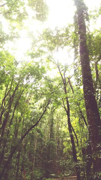 Man-made forest 🌿 Naturelover Nature Photography Manmadeforest BoholPhilippines Relaxing Sightseeing Hello World Traveling Wonderful World Fresh And Clean