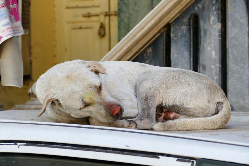 Dog sleeping in car