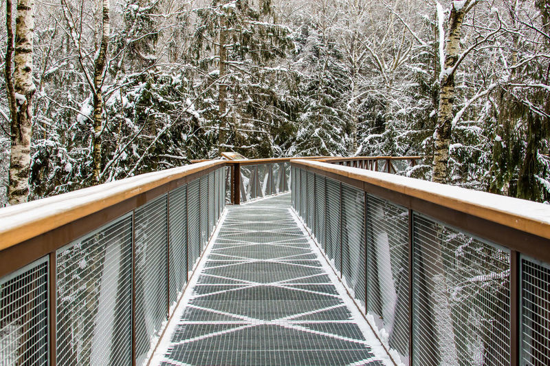 Walkway in forest against trees during winter