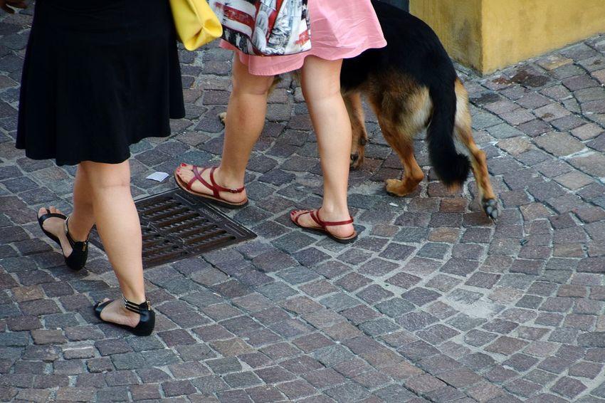 Dog Low Section Friendship Bonding Togetherness Human Leg Girls Pets Leg Human Foot