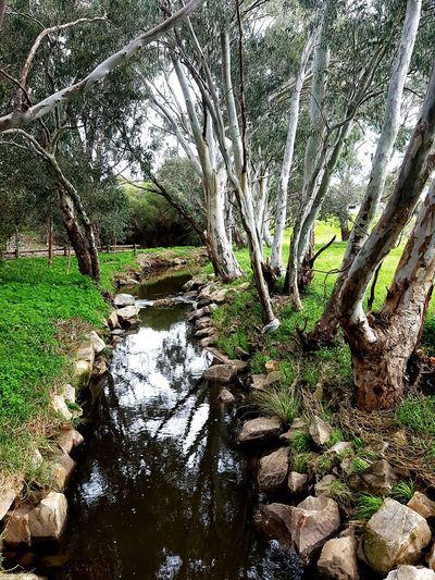 Creek Tea Tree Gully Trees Adelaide Winter Walking Green Nature Australia Landscape Urban Photography Southaustralia