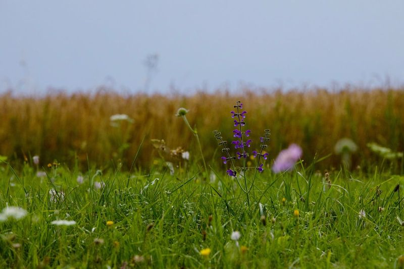 at the field Field Freshness Grass Growth Nature Plant Tranquility Beauty In Nature Close-up Day Flower Fragility Meadow No People Outdoors Selective Focus Summer