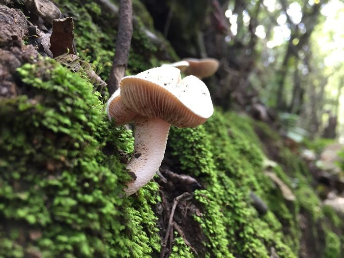 Mushroom Fungus Vegetable Plant Tree Toadstool Growth Forest Food Land Edible Mushroom Close-up Nature Beauty In Nature Day Trunk Fly Agaric Mushroom Tree Trunk Moss No People Outdoors Wild Surface Level