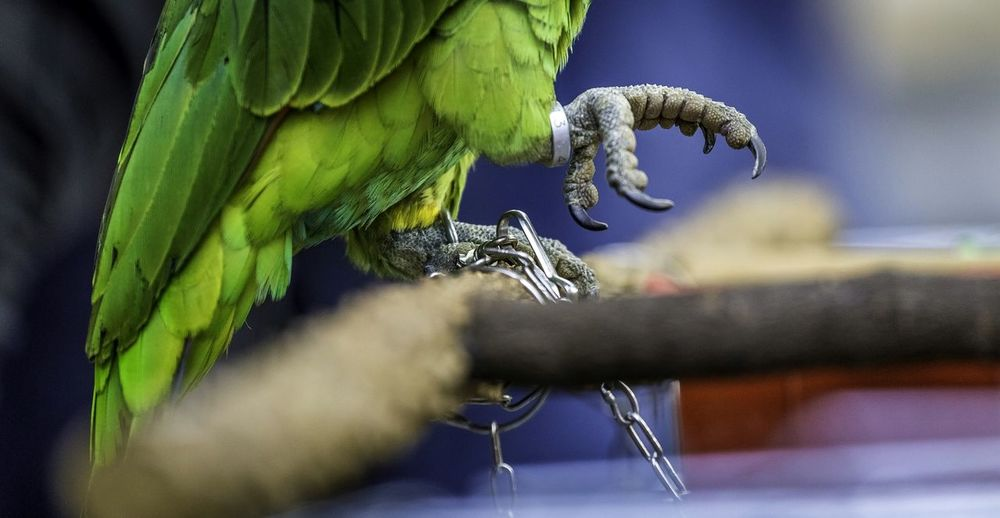 Untie Me.. Let me Fly!! Birds Cagedbirds Caged Birding Streetphotography Prisoner Pain Bird Photography Bird Watching Cagedwings