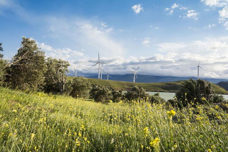 Windmills farm