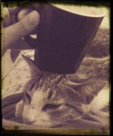 Morning Rituals cofee & cat