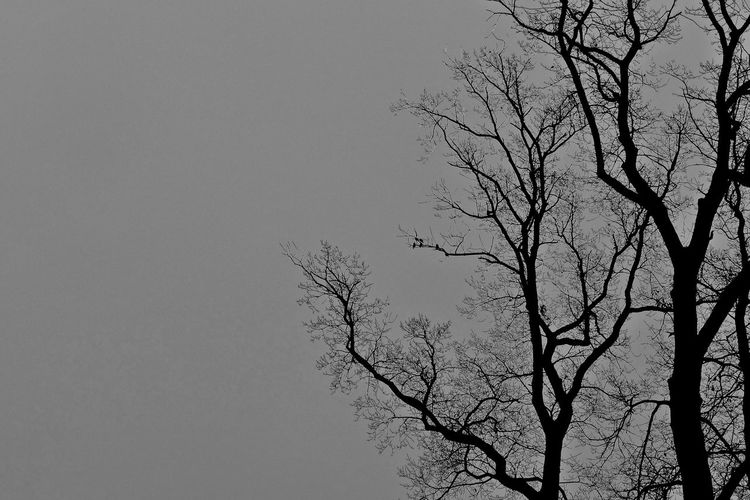 Bare Tree Beauty In Nature Black And White Branch Clear Sky Day Low Angle View Nature No People Outdoors Scenics Silhouette Sky Tranquility Tree