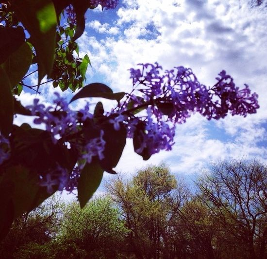 Love Lilac Flowers Beautiful Nature Smell Tadaa Community Clouds And Sky EyeEm Natue Lover My Photography Live, Life, Love