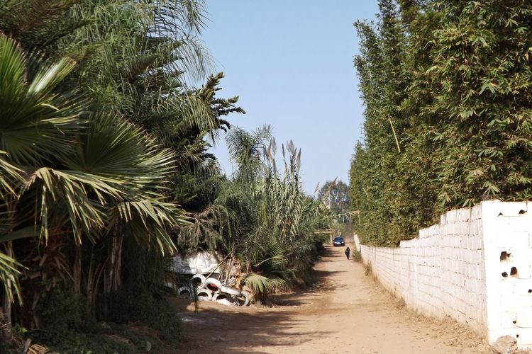 Rural Architecture Beauty In Nature Campagne Chemin Clear Sky Day Full Length Growth Ligne Nature One Person Outdoors Palm Tree Passage Passager Paysage People Plant Real People Sky The Way Forward Tree Voiture Voiture Automobile