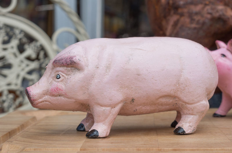 Pink Pig Animal Themes Close-up Day Indoors  Mammal No People One Animal Pig Piggy Bank Piglet Rhinoceros