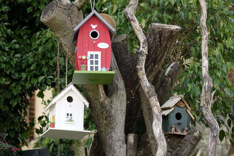 Bird Box Architecture Birdhouses Building Exterior Built Structure Close-up Day Growth Nature No People Outdoors Tree Tree Trunk