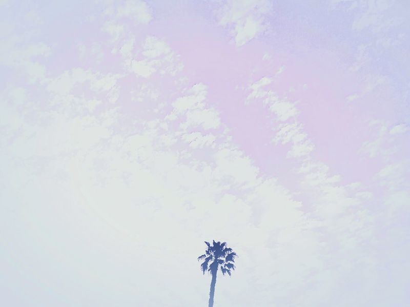 Palmtreeporn Palm Tree Palmtree Palmtreecollection Palmtree🌴🌍😊💕 Palmtreeframe Skyandclouds  Sky And Clouds Collection Sky And Clouds Clouds And Sky Clouds & Sky Cloudsandsky Lookingup Looking Up Sky_collection Sky Collection Skyscape Skyscape Photography Palm Tree And Sky Palm Tree Silhouette Palmtreephotobomb PalmTreesOfEYEEM The Sky Thesky Sky