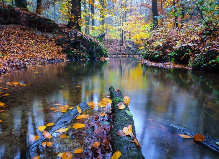 Autumn Leaf Change Nature Tree Reflection Beauty In Nature Water Scenics Day No People Outdoors Tranquil Scene Forest Tranquility Freshness Eye4photography  EyeEm Best Shots Greven Landscape Beauty In Nature Backgrounds Rain Rainy Days Perspectives On Nature