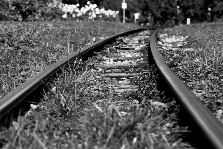 Rails Rail Transportation Track Railroad Track Selective Focus Transportation No People Nature Metal Plant The Way Forward Grass Direction Day Mode Of Transportation Diminishing Perspective Close-up Outdoors Land Gravel Surface Level Long Blackandwhite