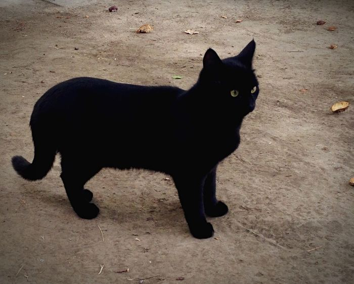 Homeless Cats Cat♡ Cats Cat котэ Коты Котик Cats Of EyeEm кот Cat Lovers Cats 🐱