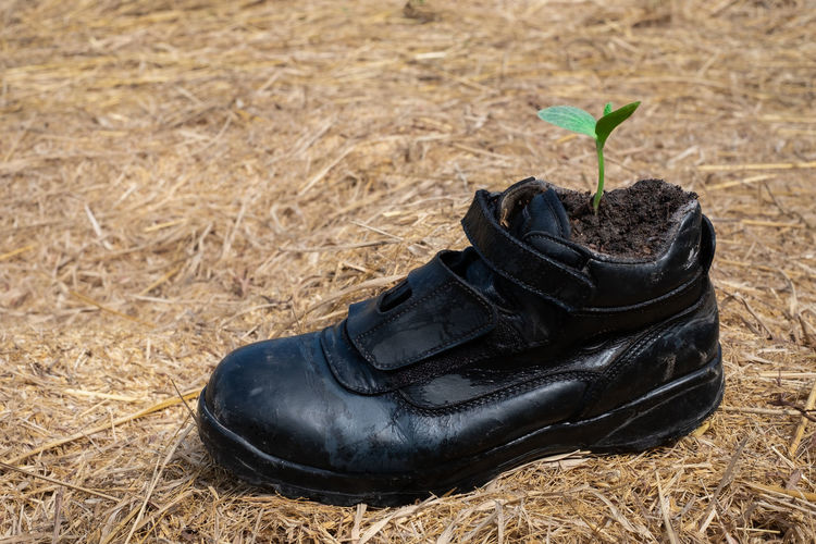 Pumpkin seed germination in boot shoes at blurred background