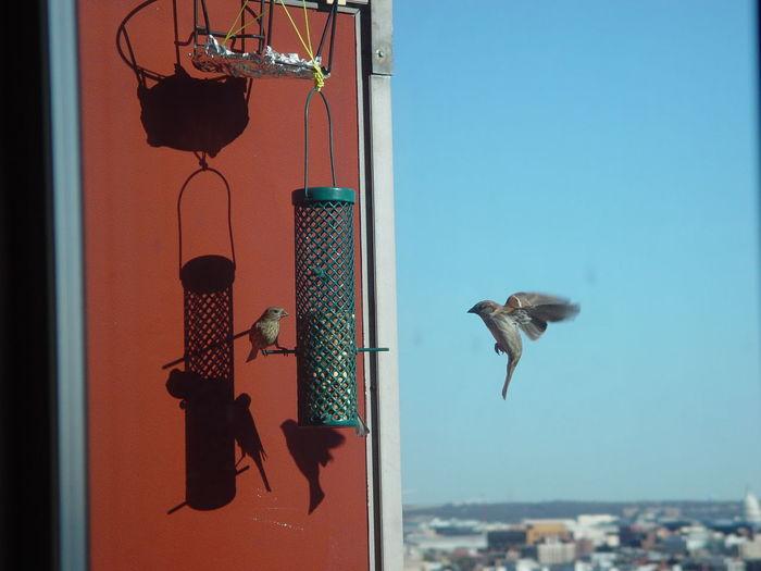 Birds by bird feeder hanging against sky