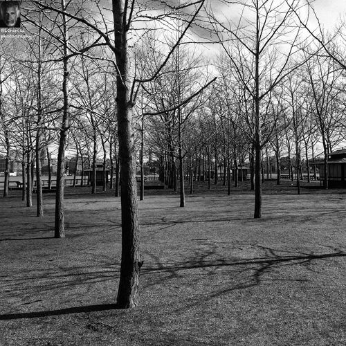 Trees and shadow........ LGarciaPhotography Iphone 6 Plus IPhone Bnw_friday_eyeemchallenge Bnw_life Noir Shadows Architecture Hudson River Street Photography Streetphoto_bw Monochrome Monochromatic Black And White Photography EyeEm Best Shots - Black + White Blackandwhite Bnw Aukey 3 In 1 Lens Light And Shadow Darkness And Light Shadow New Jersey Hoboken Clouds And Sky Clouds