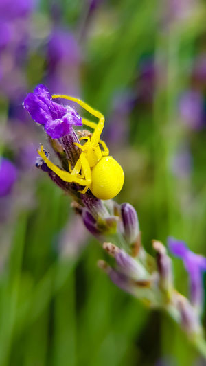 Close-up of insect pollinating on purple flower