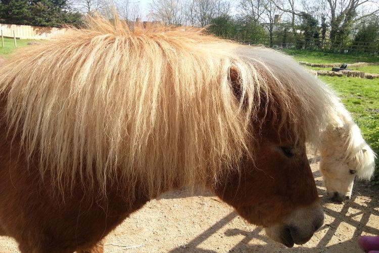 Ponies Horse