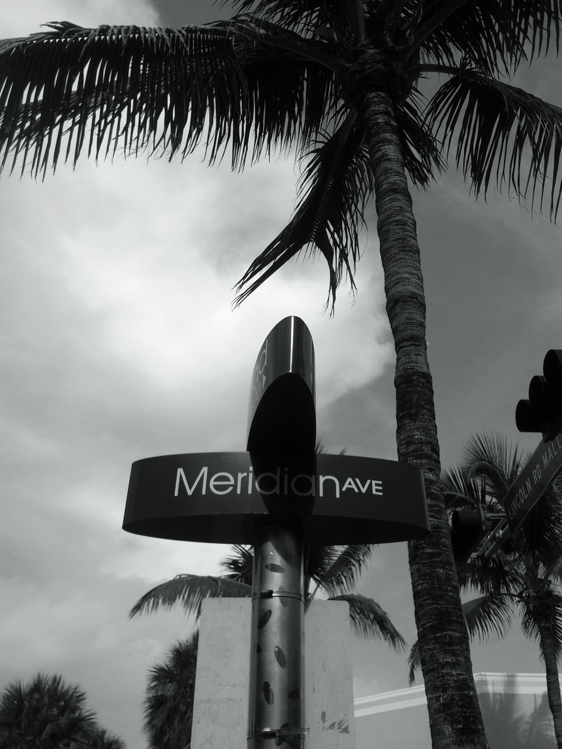low angle view, tree, palm tree, text, western script, sky, communication, tree trunk, information sign, road sign, sign, guidance, information, directional sign, built structure, no people, silhouette, outdoors, cloud - sky, growth