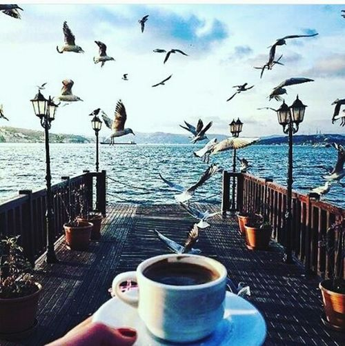 Turkyie Water Turkey Coffee - Drink Sea Day Caffee Türkei Caffeine Kayseri Bulut☁ Turkey تركيا Manzara Ve Deniz Havası Martı Coffee Cup Drink Table Outdoors Beach Bird Sky No People