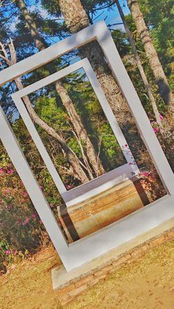Fotonatural Fotodigital Natureza Mobilephotography MobileEdition Mobgraphia Mobgrafia Campos Do Jordão VSCO Growth No People Plant Day Tree Outdoors Nature Close-up Freshness