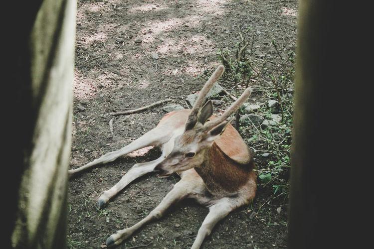 📷🦌 Deer Deer